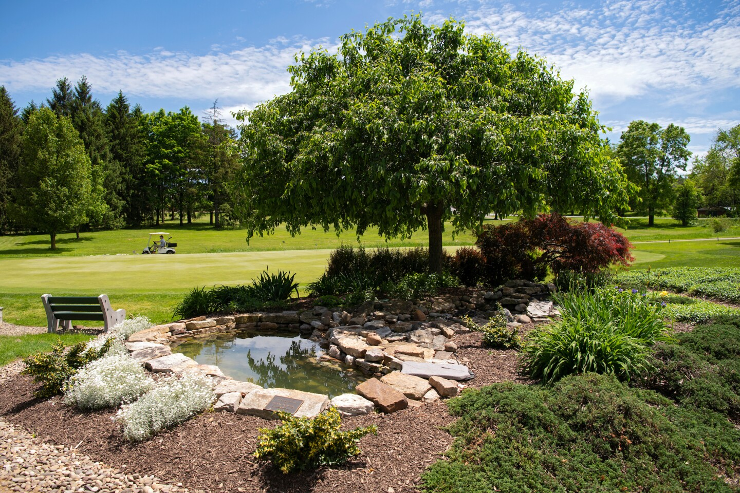 Bucknell Golf Club pond with tree and bench