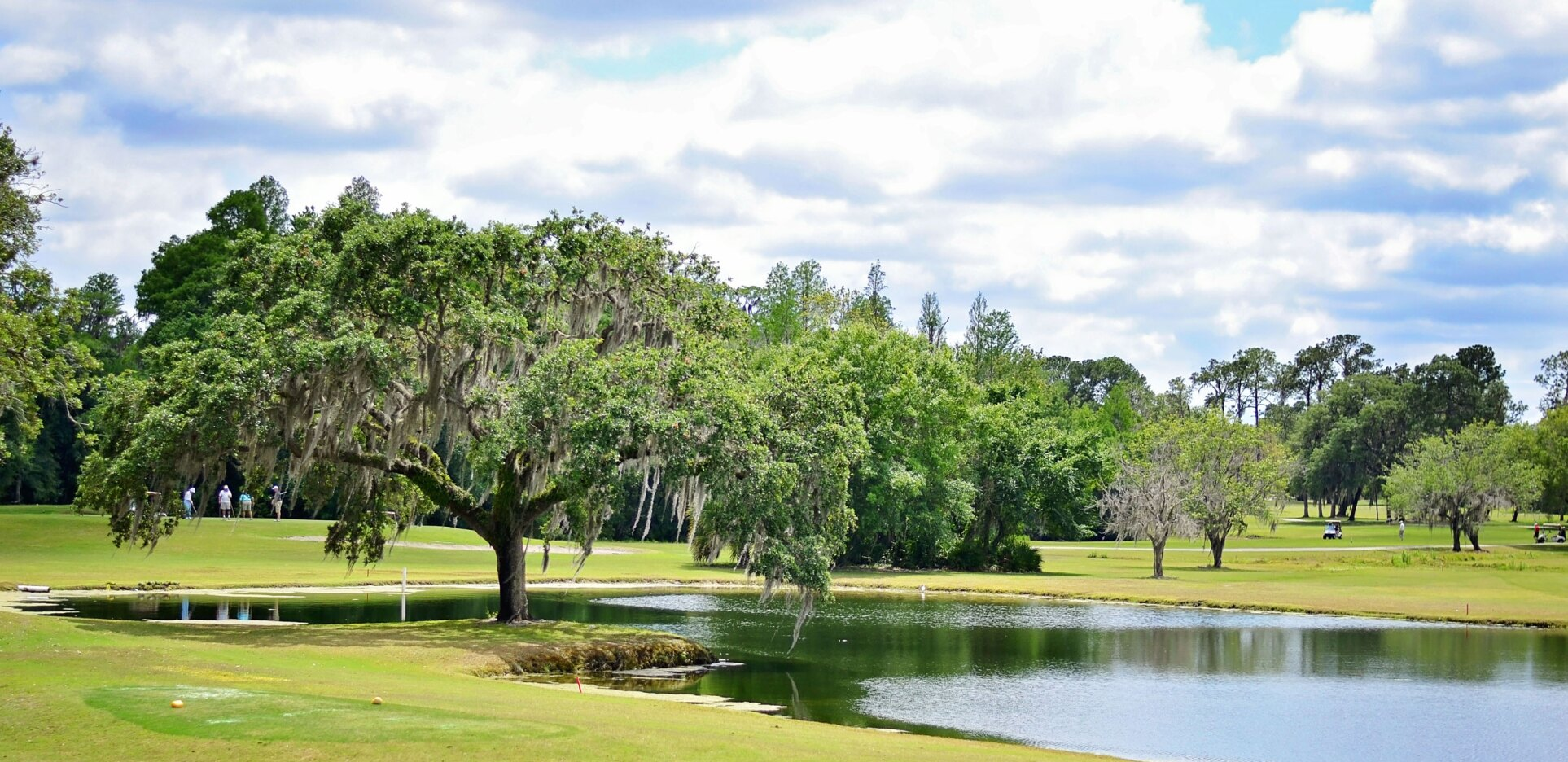 The Claw at USF golf course with Spanish moss tree in Tampa