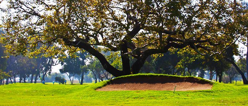 Bunker with big tree behind it