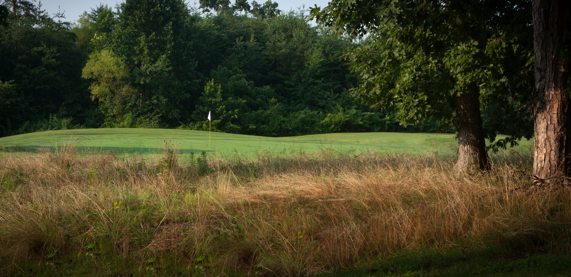 Knoxville Greens Photo