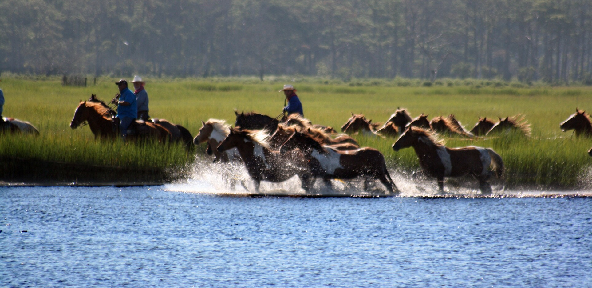 Wild Horses in Water by Captain's Cove Golf & Yacht Club